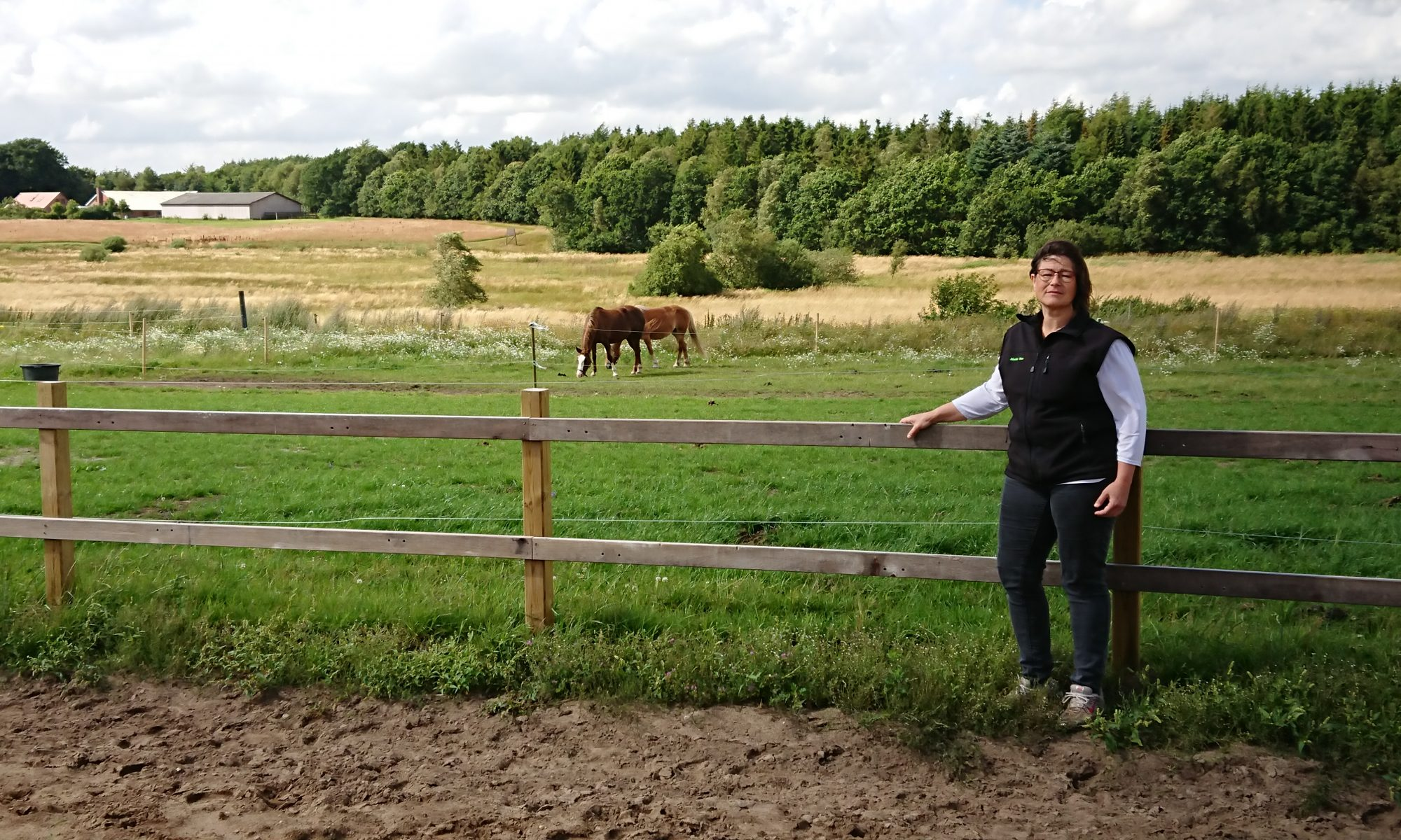 hest der taber sig