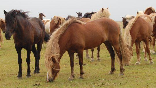 Jod og tangtilskud til heste
