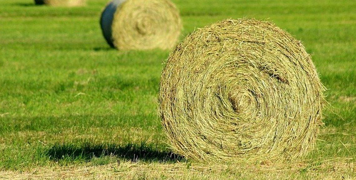 Hestefoder køber man da i baller!