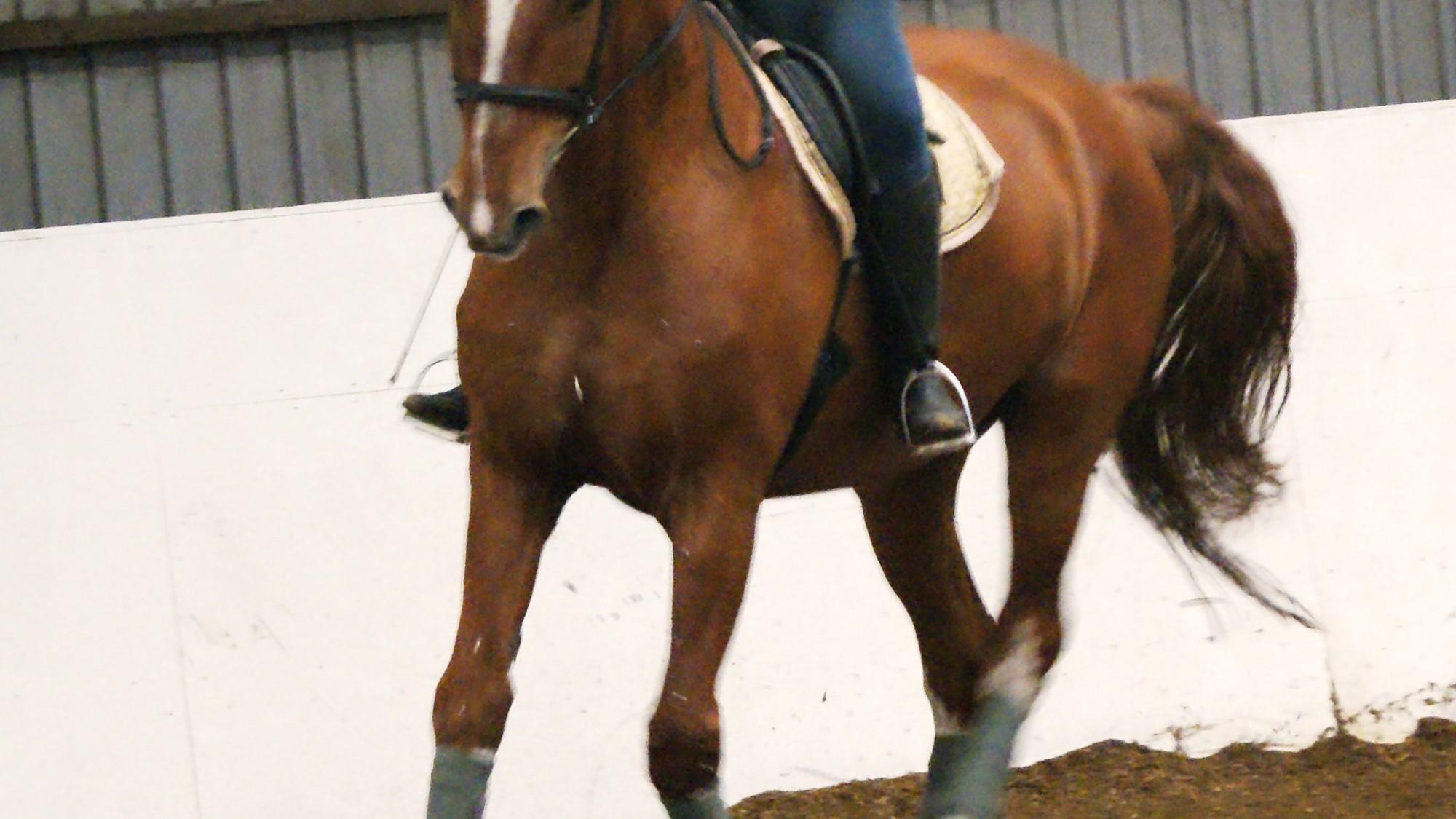 Spørg  – for en stærkere hest!