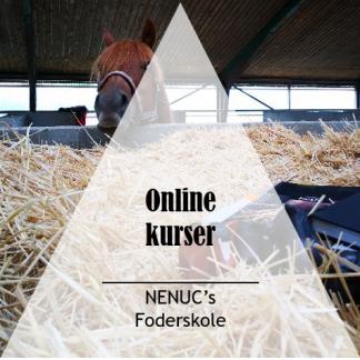Online kurser Fodring af heste