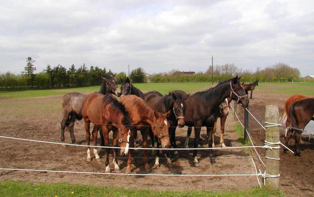 Forstå hestens biologi og lær foderhåndværket!